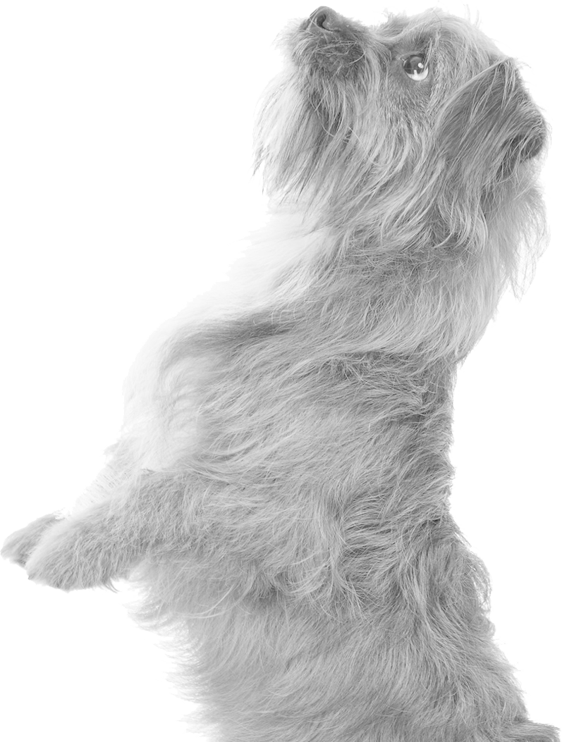 Terrier. Mobile Dog Vet South Coast NSW. South Coast Veterinary Services.