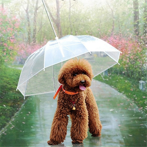 Keeping Your Dog Safe and Happy in the Wet Weather